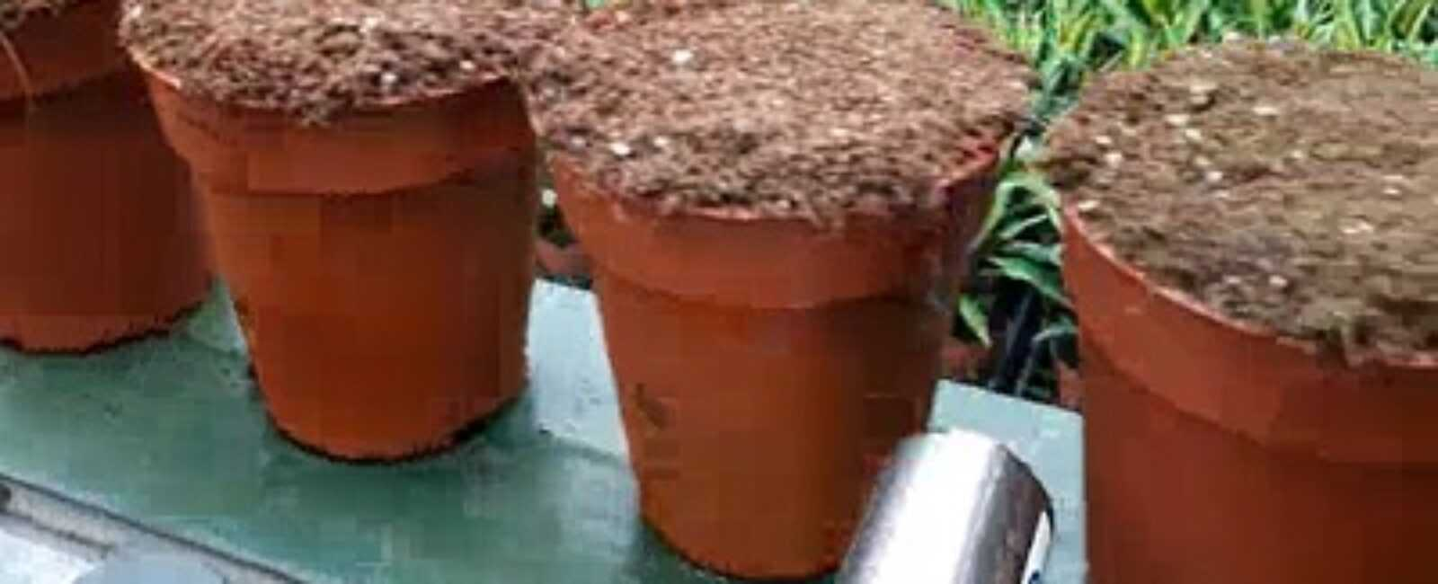 plantenpaspoort aanbrengen op plastic plantenpotjes