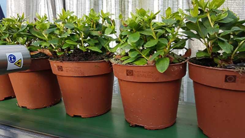 plantenpaspoort drukken met Codipack