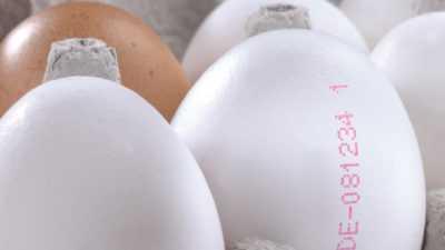 eieren coderen met Codipack Group